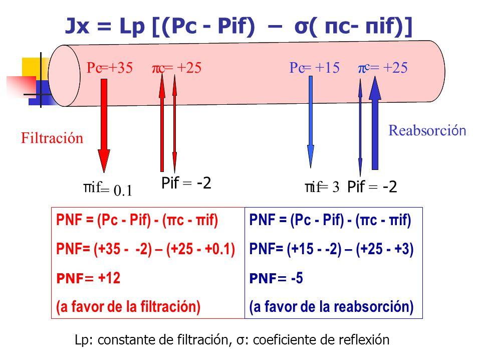Jx = Lp [(Pc - Pif) – σ( πc- πif)]